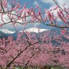 Minami Alps City – a Paradise in Spring (Togenkyo)