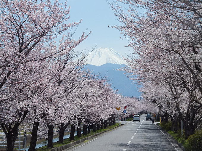 Cherry Blossom Viewing Spots in Minami Alps City
