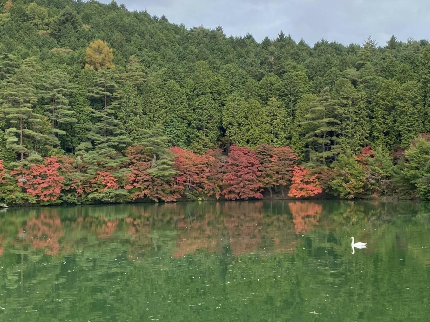 【南伊奈ヶ湖・北伊奈ヶ湖紅葉11/2】